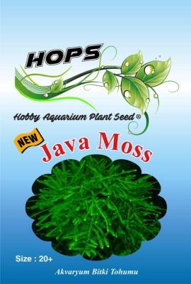 HOPS Java Moss Akvaryum Bitkisi 20+Üzeri/Adet Tohum