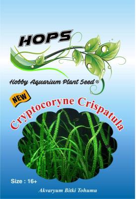 HOPS Cryptocoryne Crispatula Akvaryum Bitkisi 16+Üzeri/Ad.Tohum