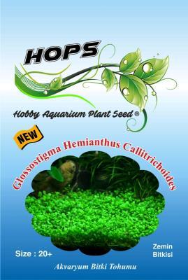 HOPS Glossostigma Hemianthus Akvaryum Zemin Bitkisi 20 +Üzeri/Ad