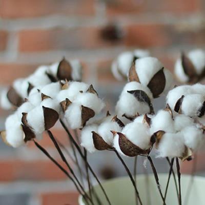 Pamuk Çiçeği kurutulmuş 9 adet