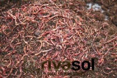 Rivasol® Kırmızı Kaliforniya Solucanı 4.000 Adet ve 5 Kg Mama